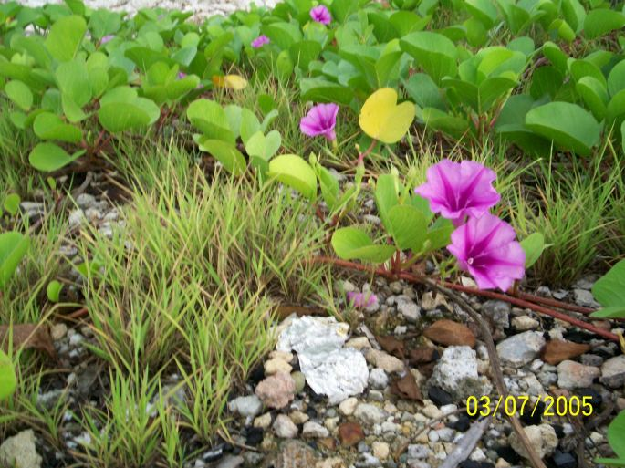 Without rain and sunshine-- not even weeds would grow!