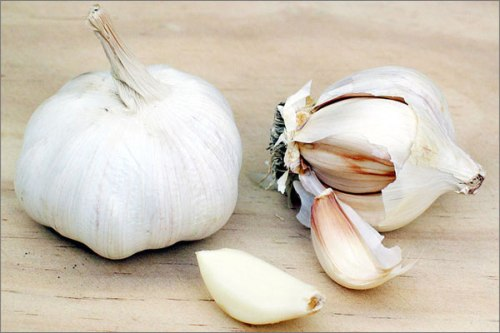 Garlic is an herb that has been used both as a food and medicine for many centuries in Tamilnadu.